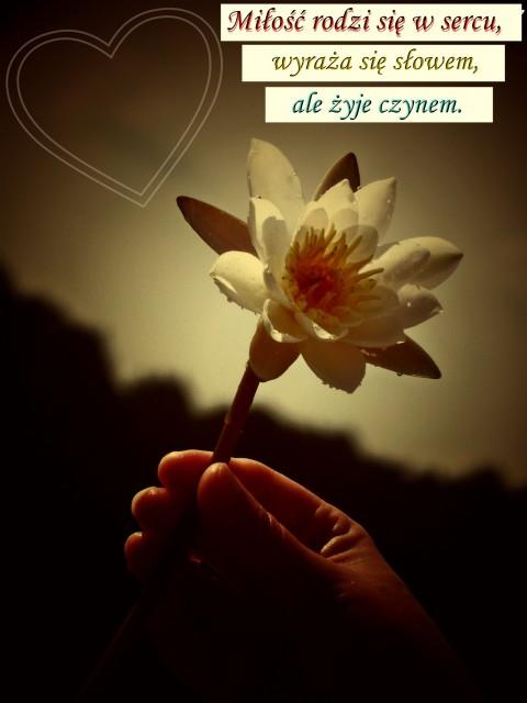 A nasza miłość żyje czynem...?